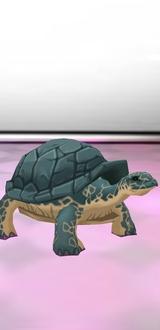 Turtle Avatar F/M